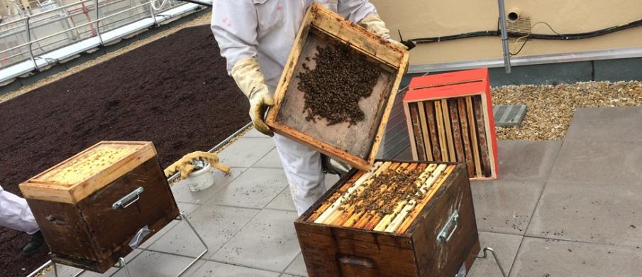 Installation d'un rucher dans une résidence 3F à Saint-Brice-sous-Forêt (95)